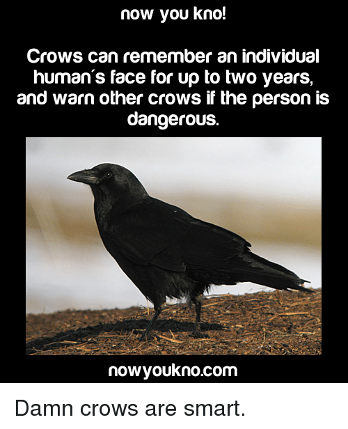 Memes, Individualism, and 🤖: now you kno!  Crows can remember an individual  human's face for up to two years,  and warn other crows if the person is  dangerous.  nowyoukno.com Damn crows are smart.