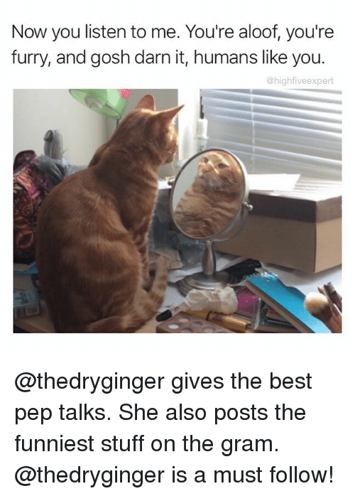 Darn It: Now you listen to me. You're aloof, you're  furry, and gosh darn it, humans like you.  @high fiveexpert @thedryginger gives the best pep talks. She also posts the funniest stuff on the gram. @thedryginger is a must follow!