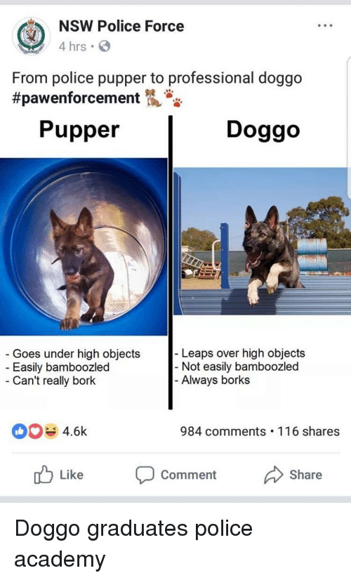 Borks: NSW Police Force  4 hrs  From police pupper to professional doggo  #pawenforcement  Pupper  Doggo  Goes under high objects  Easily bamboozled  Can't really bork  Leaps over high objects  Not easily bamboozled  Always borks  4.6k  984 comments 116 shares  Like Comment Share <p>Doggo graduates police academy</p>