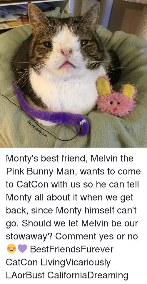 pinks: nty  Boy.nef Monty's best friend, Melvin the Pink Bunny Man, wants to come to CatCon with us so he can tell Monty all about it when we get back, since Monty himself can't go. Should we let Melvin be our stowaway? Comment yes or no 😊💜 BestFriendsFurever CatCon LivingVicariously LAorBust CaliforniaDreaming