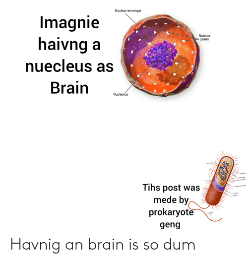 Tihs: Nuclear envelope  Imagnie  haivng  nuecleus as  Nuclear  pores  Brain  Nucleolus  -Cytoplasim  -Ribosomes  -Nucleold (DNA)  Tihs post was  mede by,  prokaryote  -Plasma membrane  --Cell wall  -Capsule  Flagellum  geng Havnig an brain is so dum