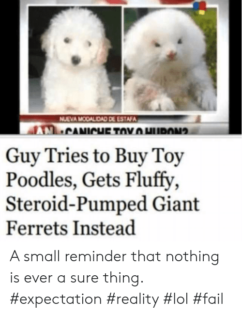 Expectation Reality: NUEVA MODALIDAD DE ESTAFA  CANICHE TOYHURON  Guy Tries to Buy Toy  Poodles, Gets Fluffy  Steroid-Pumped Giant  Ferrets Instead A small reminder that nothing is ever a sure thing. #expectation #reality #lol #fail