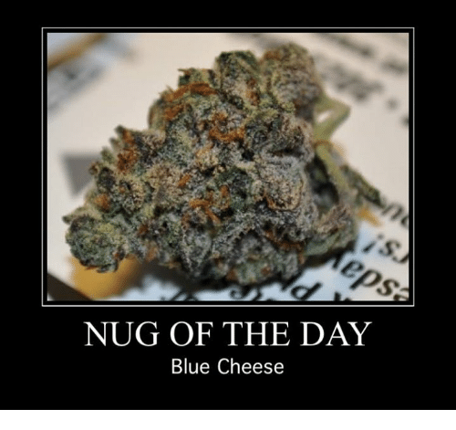 blue cheese: NUG OF THE DAY  Blue Cheese