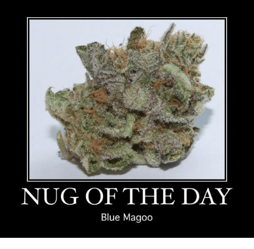🤖: NUG OF THE DAY  Blue Magoo