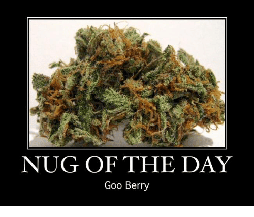 Memes and 🤖: NUG OF THE DAY  Goo Berry