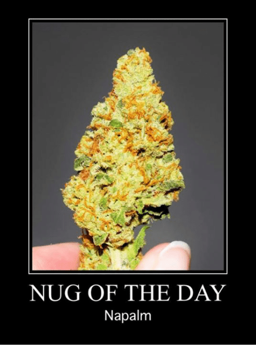 napalm: NUG OF THE DAY  Napalm