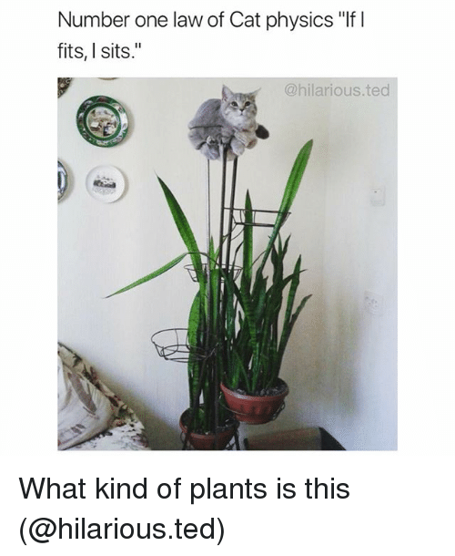 """Funny, Ted, and Hilarious: Number one law of Cat physics """"If I  fits, I sits.""""  @hilarious.ted What kind of plants is this (@hilarious.ted)"""