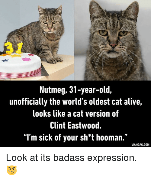 Sick of your sh t hooman quot via 9gag comlook at its badass expression