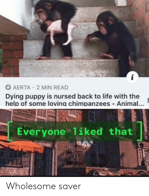 the help: O AERTA 2 MIN READ  Dying puppy is nursed back to life with the  help of some loving chimpanzees - Animal...  Everyone liked that Wholesome saver