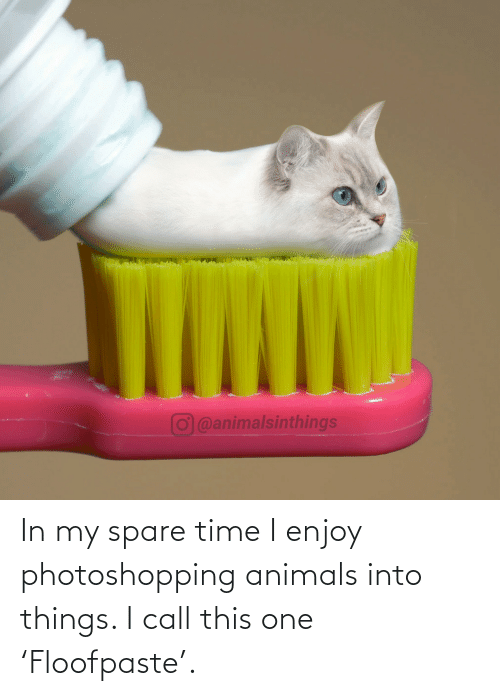 I Call: O@animalsinthings In my spare time I enjoy photoshopping animals into things. I call this one 'Floofpaste'.