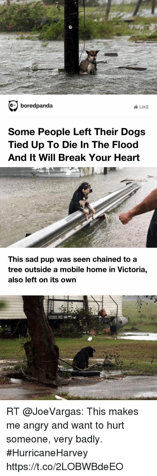 Search Kid Tied Up Memes On Meme - Some people tied their dogs up and left them to die during the flood