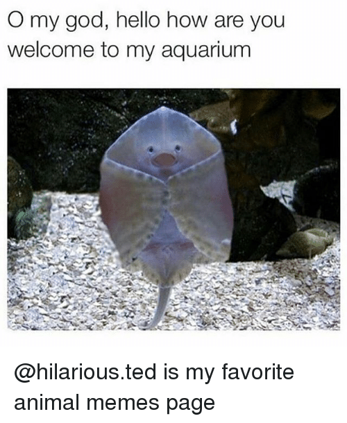 You Welcome: O my god, hello how are you  welcome to my aquarium @hilarious.ted is my favorite animal memes page