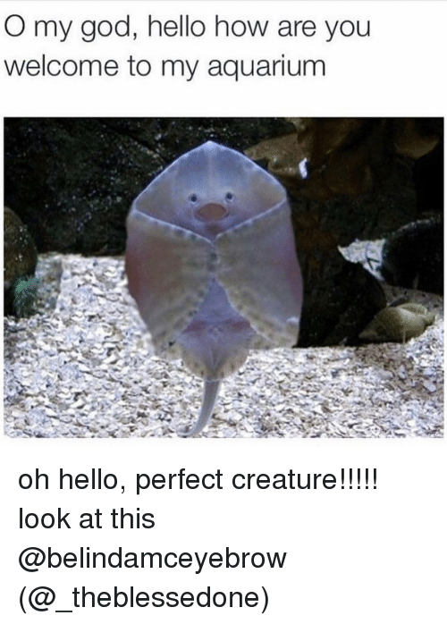 You Welcome: O my god, hello how are you  welcome to my aquarium oh hello, perfect creature!!!!! look at this @belindamceyebrow (@_theblessedone)