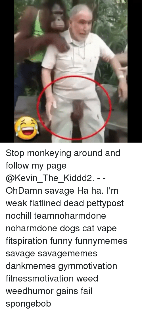 Memes, 🤖, and Weeds: o Stop monkeying around and follow my page @Kevin_The_Kiddd2. - - OhDamn savage Ha ha. I'm weak flatlined dead pettypost nochill teamnoharmdone noharmdone dogs cat vape fitspiration funny funnymemes savage savagememes dankmemes gymmotivation fitnessmotivation weed weedhumor gains fail spongebob