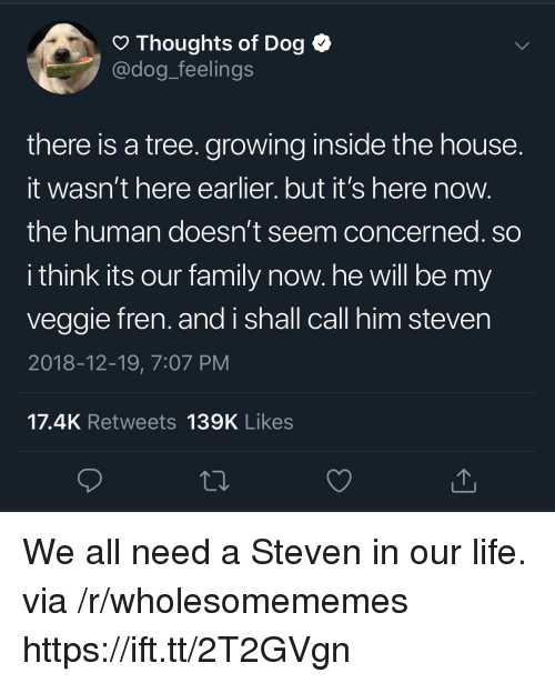 Its Here: O Thoughts of Dog <  @dog_feelings  there is a tree. growing inside the house  It wasn't here earlier. but it's here now  the human doesn't seem concerned. so  i think its our family now. he will be my  veggie fren. and i shall call him steven  2018-12-19, 7:07 PM  17.4K Retweets 139K Likes We all need a Steven in our life. via /r/wholesomememes https://ift.tt/2T2GVgn