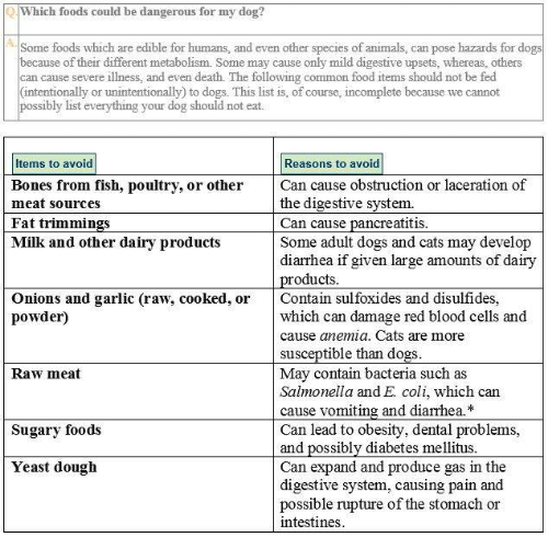 O Which Foods Could Be Dangerous For My Dog? Some Foods