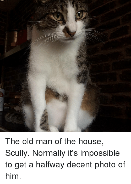 Old Man, House, and Old: o1s The old man of the house, Scully. Normally it's impossible to get a halfway decent photo of him.