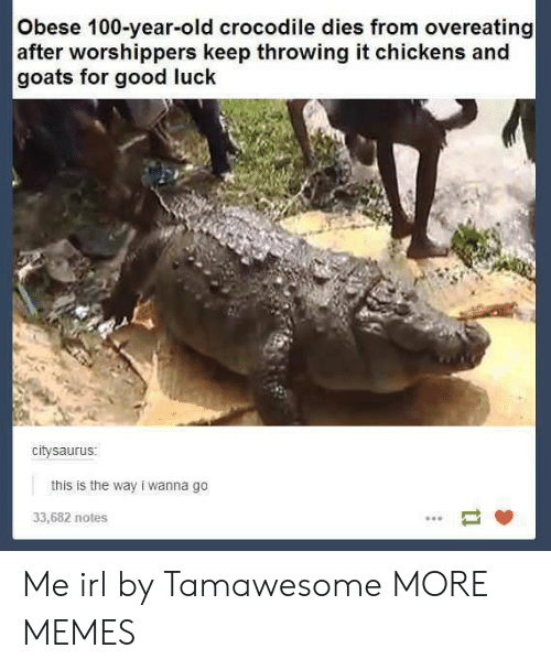 overeating: Obese 100-year-old crocodile dies from overeating  after worshippers keep throwing it chickens and  goats for good luck  citysaurus  this is the way i wanna go  33,682 notes Me irl by Tamawesome MORE MEMES