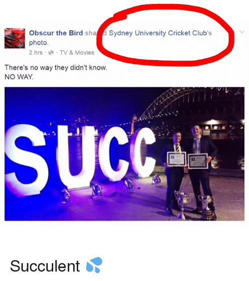 ucc: Obscur the Bird sha d Sydney University Cricket Club's  photo  2 hrs TV & Movies  There's no way they didn't know  NO WAY  UCC Succulent 💦