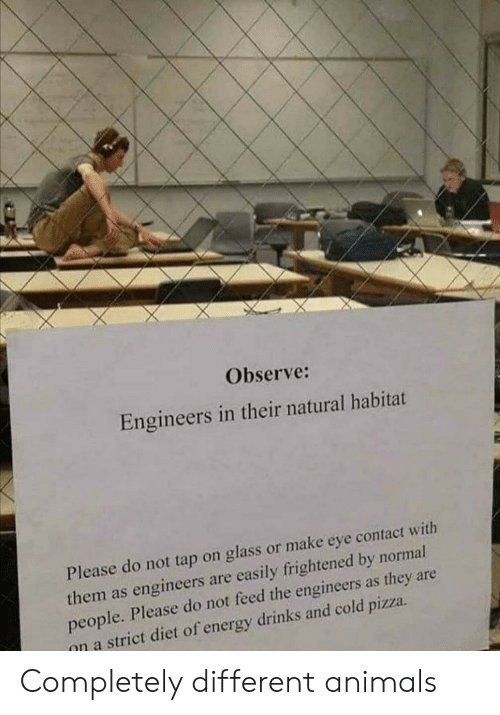 Frightened: Observe:  Engineers in their natural habitat  Please do not tap on glass or make eye contact with  them as engineers are easily frightened by normal  people. Please do not feed the engineers as they are  on a strict diet of energy drinks and cold pizza Completely different animals