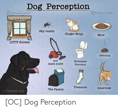 Dog: [OC] Dog Perception