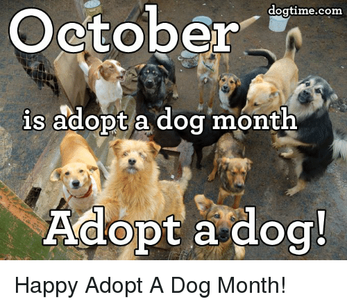 Memes, Happy, and Happiness: October  dogtime.com  is adopt a dog month  Adopt a dog! Happy Adopt A Dog Month!