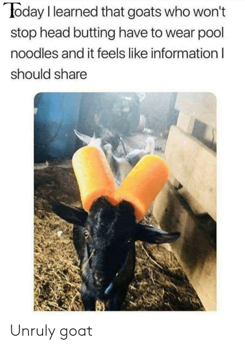 Wont Stop: oday I learned that goats who won't  stop head butting have to wear pool  noodles and it feels like information l  should share Unruly goat