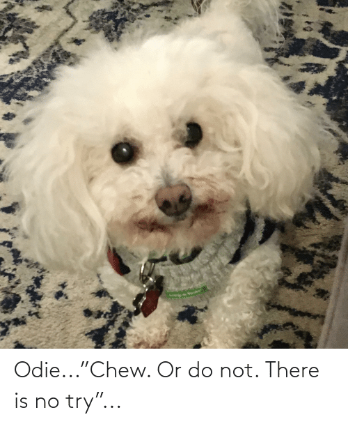 """there is no try: Odie...""""Chew. Or do not. There is no try""""..."""