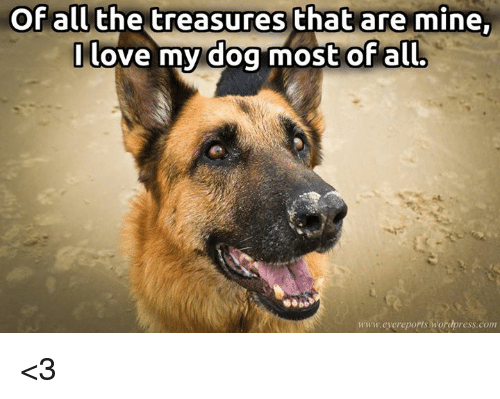 love my dogs: Of all the treasures that are mine.  I love my dog most of all.  www.eyereports wordpress.com <3
