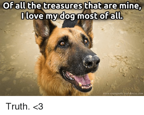 love my dogs: Of all the treasures that are mine.  I love my dog most of all.  www.eyereports wordpress.com Truth. <3