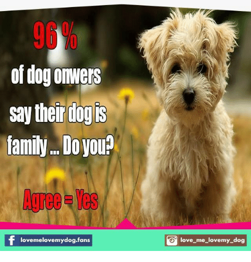 love my dogs: of dogolwers  say their dog is  family.. Do  you  lovemelovemydog.fans  O love me love my dog