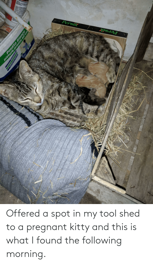 The Following: Offered a spot in my tool shed to a pregnant kitty and this is what I found the following morning.