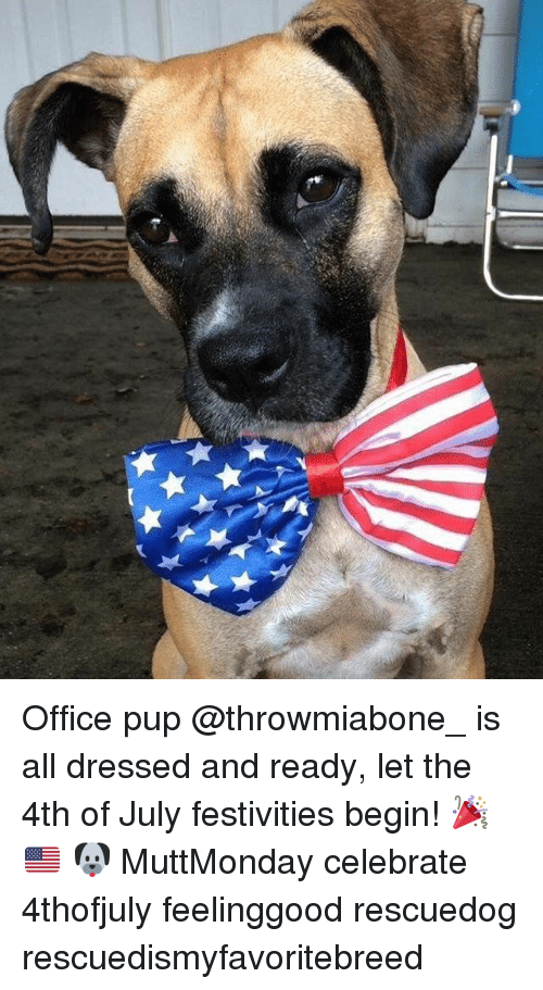 festivities: Office pup @throwmiabone_ is all dressed and ready, let the 4th of July festivities begin! 🎉 🇺🇸 🐶 MuttMonday celebrate 4thofjuly feelinggood rescuedog rescuedismyfavoritebreed