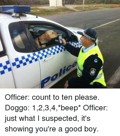 Good, Boy, and Doggo: Officer: count to ten please.  Doggo: 1,2,3,4,*beep*  Officer: just what I suspected, it's showing you're a good boy.