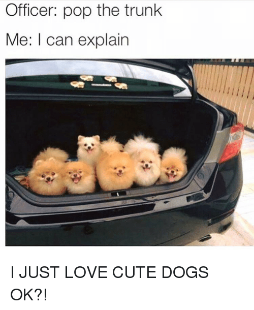 I Can Explain Dogs In The Trunk