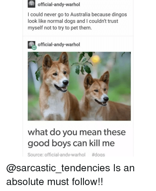 Dogs, Memes, and Andy Warhol: official-andy-warhol  I could never go to Australia because dingos  look like normal dogs and I couldn't trust  myself not to try to pet them.  official-andy-warhol  what do you mean these  good boys can kill me  Source: Official-andy-warhol  @sarcastic_tendencies Is an absolute must follow!!