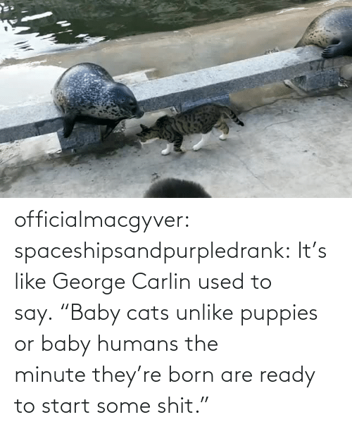 "George: officialmacgyver:  spaceshipsandpurpledrank:  It's like George Carlin used to say. ""Baby cats unlike puppies or baby humans the minute they're born are ready to start some shit."""