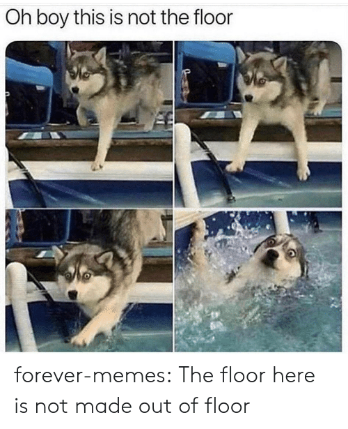 oh boy: Oh boy this is not the floor forever-memes:  The floor here is not made out of floor