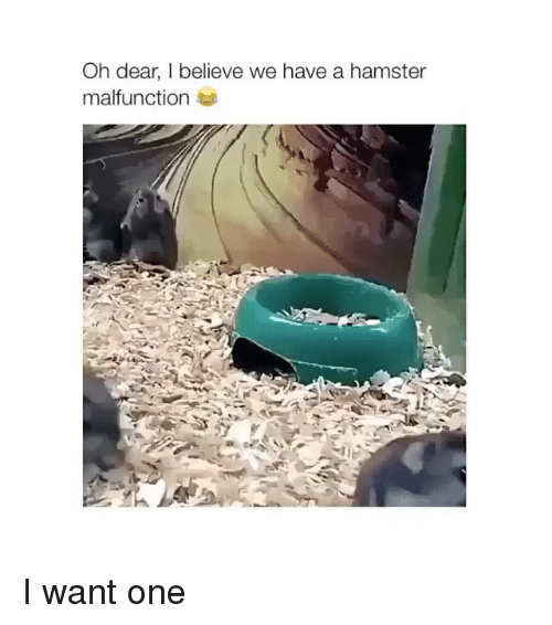 Hamster, One, and Believe: Oh dear, I believe we have a hamster  malfunction I want one