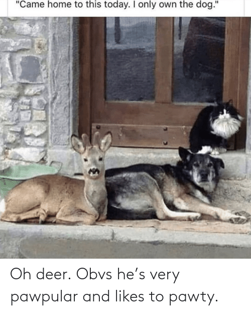 likes: Oh deer. Obvs he's very pawpular and likes to pawty.