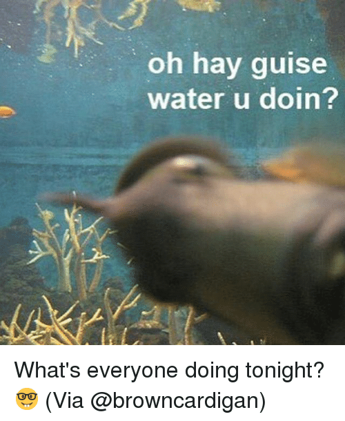 guise: oh hay guise  water u doin? What's everyone doing tonight? 🤓 (Via @browncardigan)