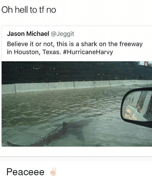 houston texas: Oh hell to tf no  Jason Michael @Jeggit  Believe it or not, this is a shark on the freeway  in Houston, Texas. Peaceee ✌🏻