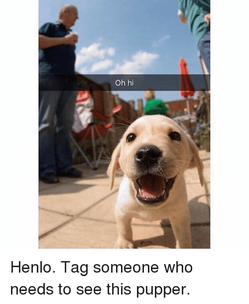 Memes, Tag Someone, and 🤖: Oh hi Henlo. Tag someone who needs to see this pupper.