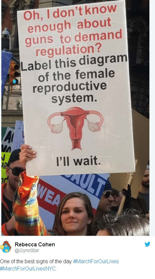 Best Signs: Oh, I don't know  enough about  guns to demand  requlation?  Label this diagram  of the female  reproductive  system.  I'll wait.  Rebecca Cohen  @Gynostar  One of the best signs of the day