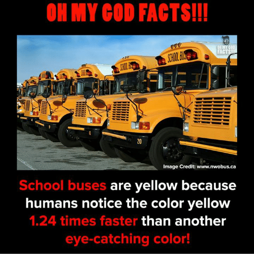 Facts, God, and Memes: OH MY GOD FACTS!!!  FACTS  Image Credit: www.nwobus.ca  School buses are yellow because  humans notice the color yellow  1.24 times faster than another  eye-catching color!