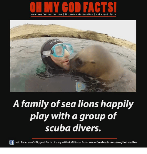 Facebook, Facts, and Family: OH MY GOD FACTS!  www.omg facts online.com I fb.com/om g facts online l g oh m y god facts  A family of sea lions happily  play with a group of  scuba divers.  f Join Facebook's Biggest Facts Library with 6 Million+ Fans  www.facebook.com/omgfactsonline