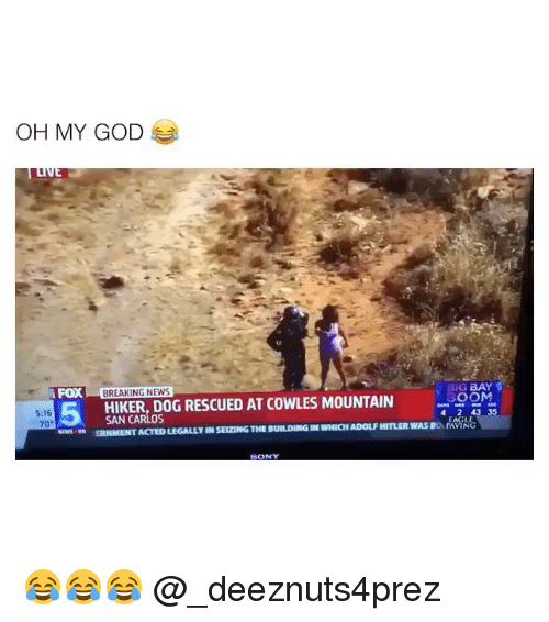 God, Memes, and News: OH MY GOD  FOX BREAKING NEWS  IG BAY  HIKER, DOG RESCUED AT COWLES MOUNTAIN 30OM  5:16  70  SAN CARLos  4 2 43 35  SERNMENT ACTED LEGALLY IN SEIZING THE BUILDING IN WHICH ADOLF HITLER WAS BOAG  SONY 😂😂😂 @_deeznuts4prez