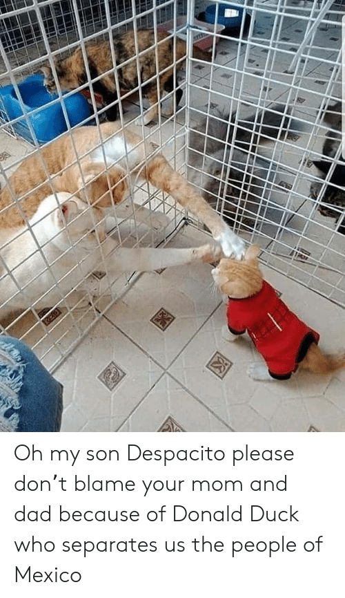 donald duck: Oh my son Despacito please don't blame your mom and dad because of Donald Duck who separates us the people of Mexico