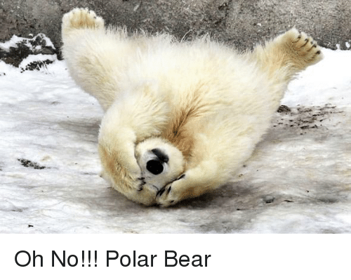 Bear, Polar Bear, and Oh No: Oh No!!! Polar Bear