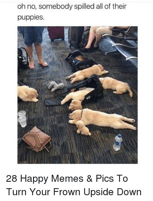 memes pics: oh no, somebody spilled all of their  puppies. 28 Happy Memes & Pics To Turn Your Frown Upside Down